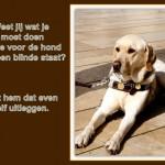 Blinden-geleidehond-Raf.002