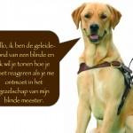 Blinden-geleidehond-Raf.003
