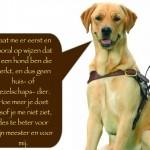 Blinden-geleidehond-Raf.004