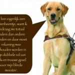 Blinden-geleidehond-Raf.005