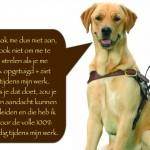 Blinden-geleidehond-Raf.006