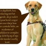 Blinden-geleidehond-Raf.008