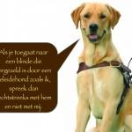 Blinden-geleidehond-Raf.010