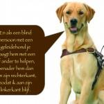 Blinden-geleidehond-Raf.011