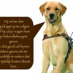 Blinden-geleidehond-Raf.012
