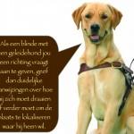 Blinden-geleidehond-Raf.013