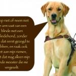 Blinden-geleidehond-Raf.014