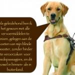 Blinden-geleidehond-Raf.016