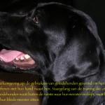Blinden-geleidehond-Raf.018
