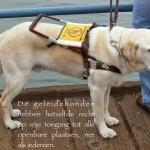 Blinden-geleidehond-Raf.019