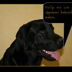 Blinden-geleidehond-Raf.020