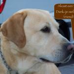 Blinden-geleidehond-Raf.021