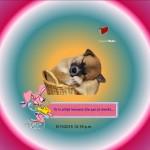Blinden-geleidehond-Raf.022